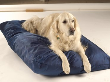 Dog Beds/Bedding