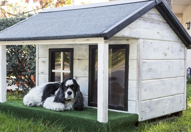 outdoor-dog-kennel