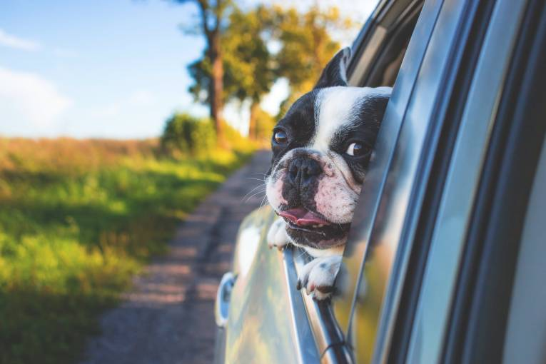 Top Tips on Travelling With Your Dog