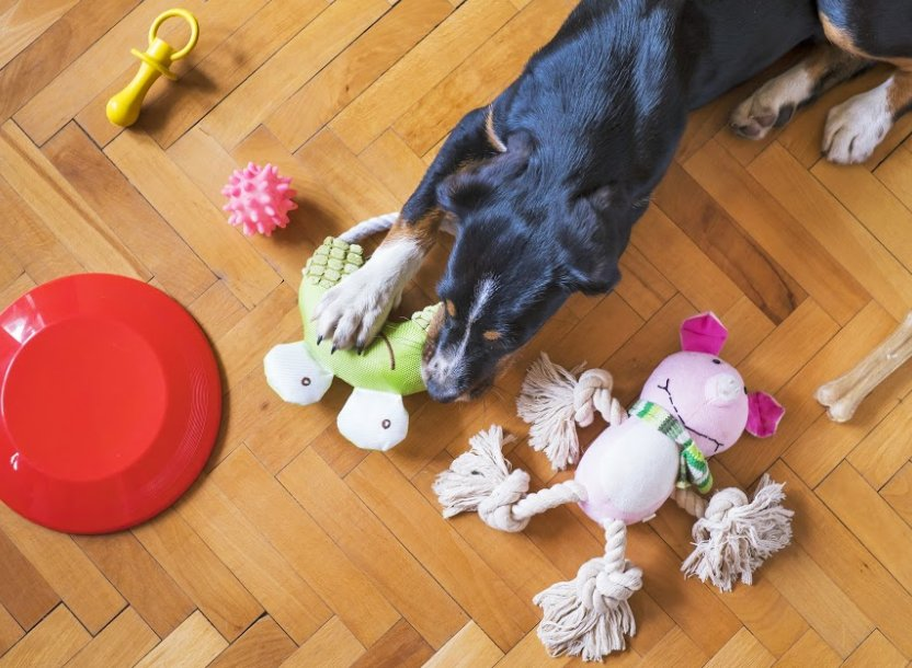 dog-playing-with-toys