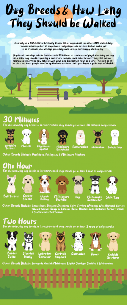 dog-walking-breed-and-time