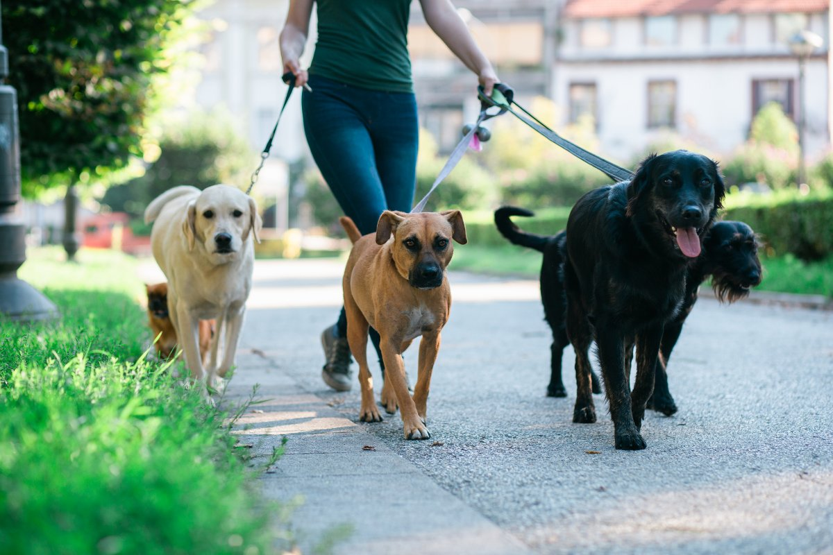 dogs-walking-different-breed