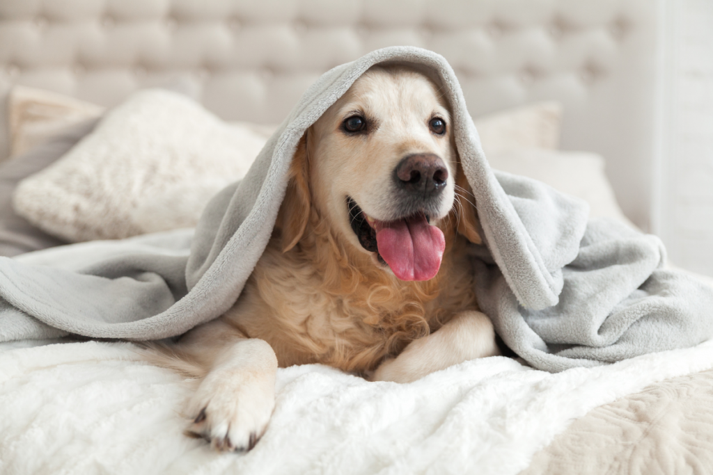 Happy dog in bed