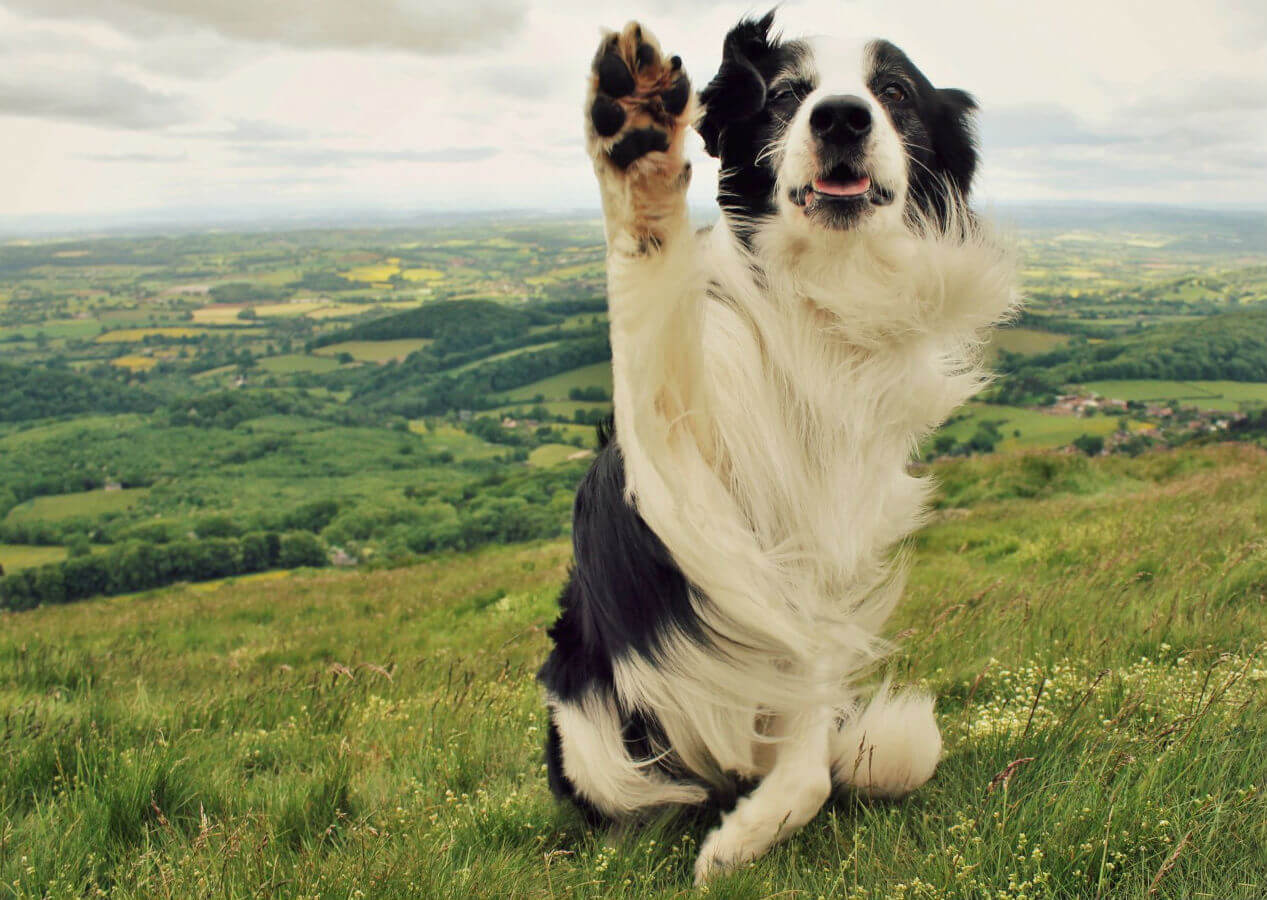dog waving 1