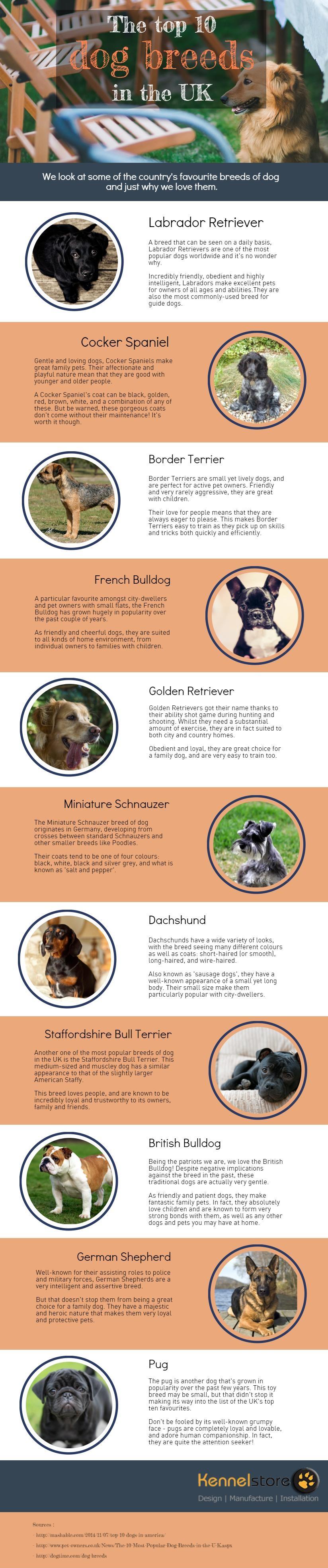 dog breeds suit lifestyle uk